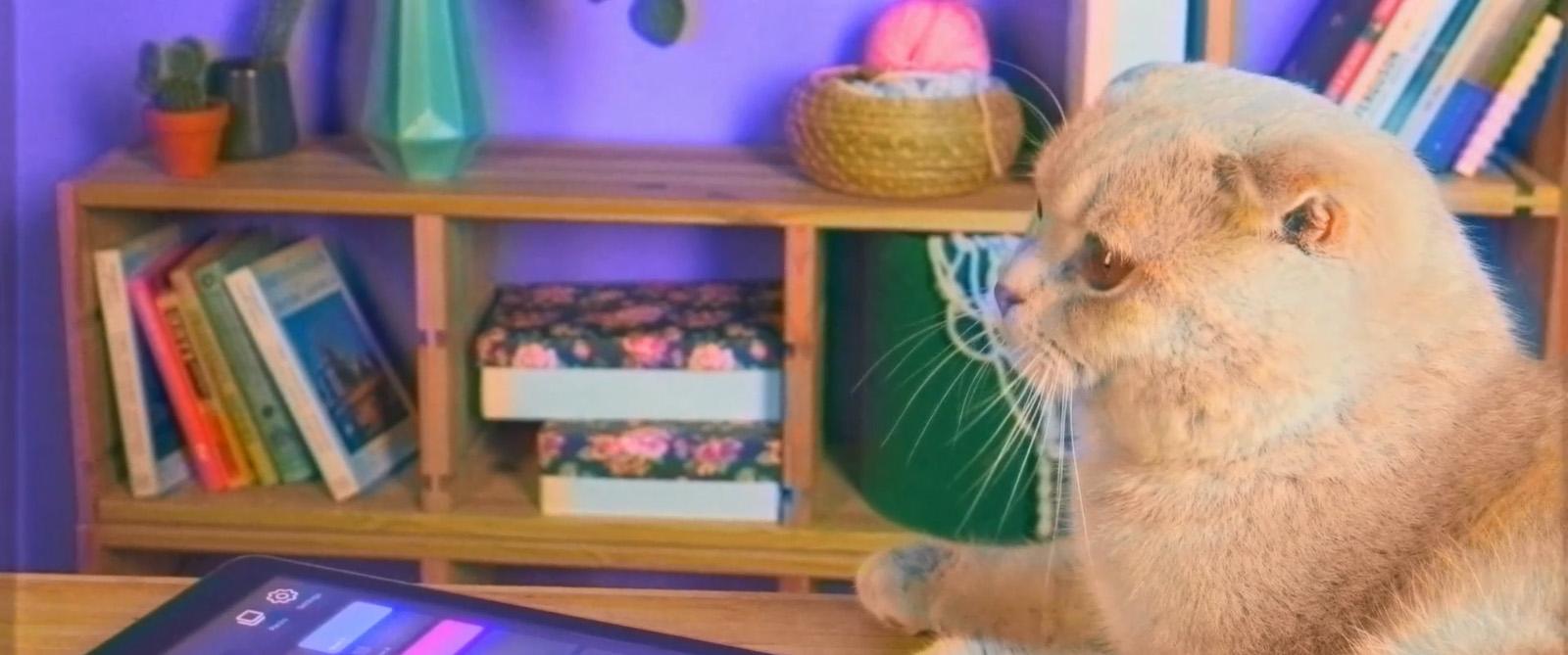 muzart cat
